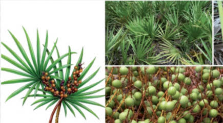 Saw palmetto sexual side-effects